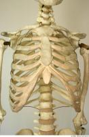Skeleton 0019