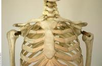 Skeleton 0020