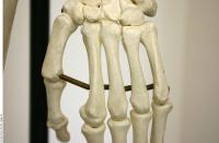 Skeleton 0192