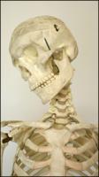 Skeleton poses