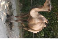 Camel 0024
