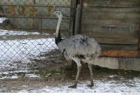 Emus 0001
