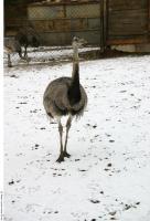Emus 0002