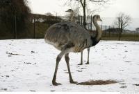 Emus 0003