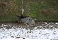 Emus 0007