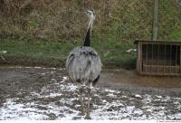 Emus 0008