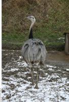 Emus 0010