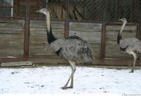 Emus 0011