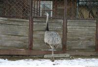 Emus 0012
