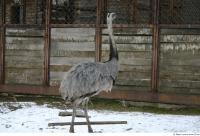 Emus 0013