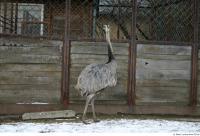 Emus 0015