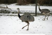 Emus 0016