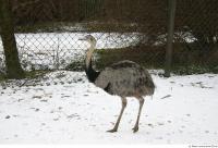 Emus 0017