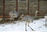 Emus 0018