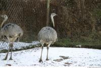 Emus 0019