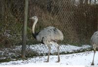Emus 0021