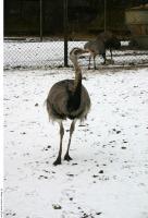 Emus 0022