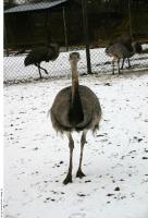 Emus 0023