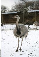 Emus 0024
