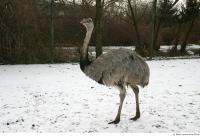 Emus 0025