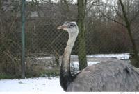 Emus 0026