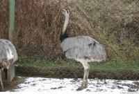 Emus 0029