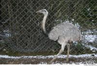 Emus 0030