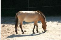 HorseZOO 0002