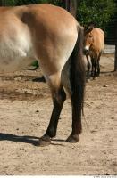 HorseZOO 0010