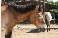 HorseZOO 0018
