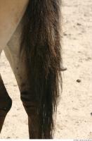 HorseZOO 0021