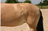 HorseZOO 0028