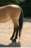 HorseZOO 0029