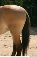 HorseZOO 0030