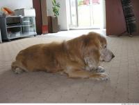 Dog poses 0003