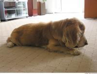 Dog poses 0004