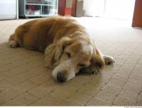 Dog poses 0005