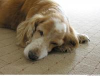 Dog poses 0006