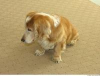 Dog poses 0009