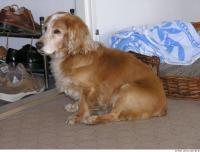 Dog poses 0010