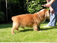 Dog poses 0015