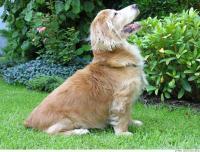 Dog poses 0018