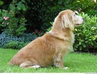 Dog poses 0019