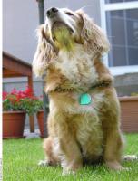 Dog poses 0020