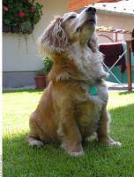Dog poses 0021