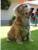 Dog poses 0022