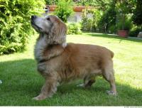 Dog poses 0024