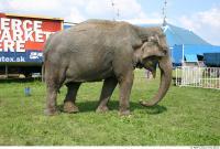 Elephant 0001