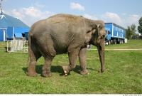 Elephant 0005