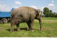 Elephant 0006